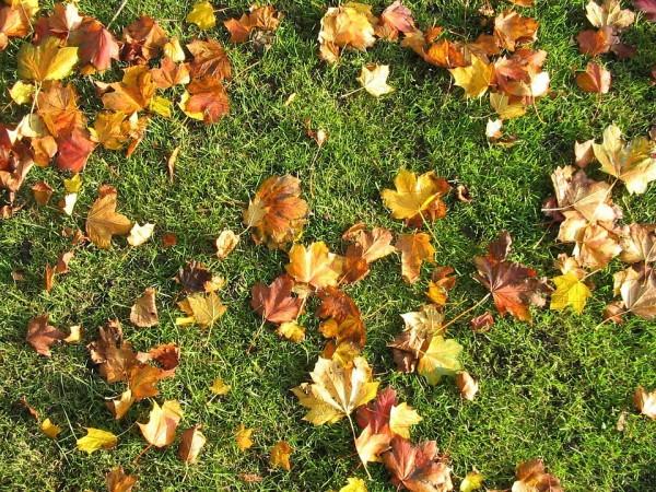 autumn-lawn-picture